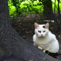 """""""Кто тут котиков не любит...?"""" :: Наталия П"""