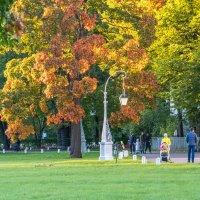 осень на Елагином :: navalon M