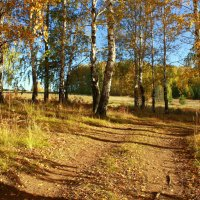 Осень в березовой роще :: Нэля Лысенко