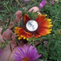 Цветы - богатство для души. . :: Alex Aro Aro Алексей Арошенко
