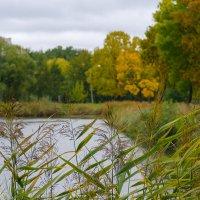 Осенние краски парка Александрино :: Роман Алексеев