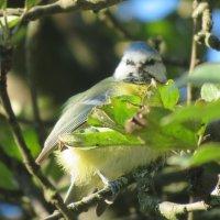 Птичка-невеличка. :: Зинаида