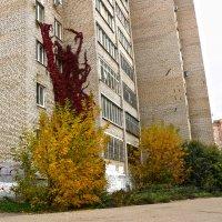 Осеннее украшение дома :: Светлана
