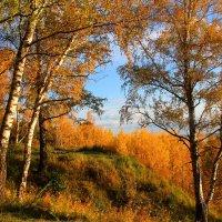В багрец и золото одетые леса :: владимир тимошенко