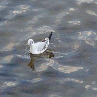 чайка :: Anna-Sabina Anna-Sabina