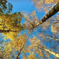 Осенний хоровод :: Татьяна