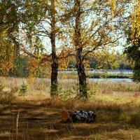 Березовая осень :: Нэля Лысенко