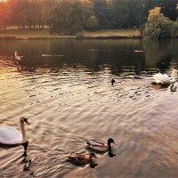Птицы на озере :: Aida10