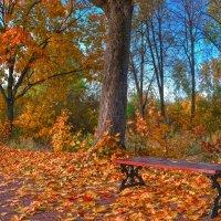 В осеннем парке :: Александра Климина