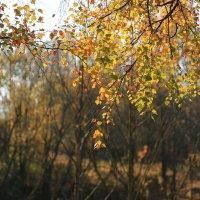Осенняя пора :: Ninell Nikitina