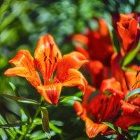 Про цветы :: Владимир Колесников