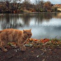 Пушистый боевой кот.. :: Лилия .
