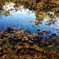 Падают, падают, падают, падают листья... :: Ольга Русанова (olg-rusanowa2010)