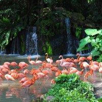 Розовые фламинго из Сингапура :: Юрий Белоусов