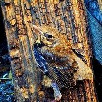 птица :: Виктория Маслова