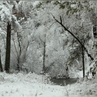 И выпал снег в октябре ... :: galina tihonova
