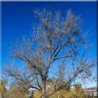 Дерево.Осень. :: Пётр Сухов