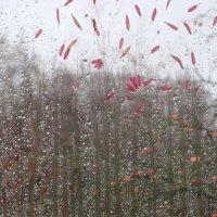 Дождь за моим окном :: Mariya laimite