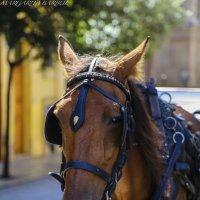 Palma's horse :: BestMargo 5555