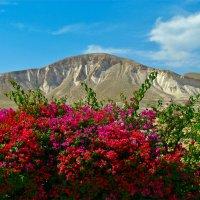 Цветы-горы-небо :: Boris Khershberg