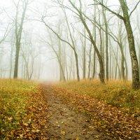 туман :: Александр Ермолов