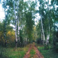 Лес :: Алексей Воропаев