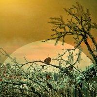 Ноктюрн замерзших птиц :: Александр   Матвей БЕЛЫЙ