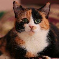 кошка :: виктор омельчук