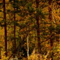 Семен в лесу :: Анна Чанцева (Корнакова)