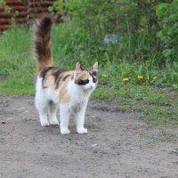 Кошка, которая гуляет сама по себе. :: Галина Смирнова