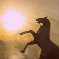 Конь :: Екатерина Миронова