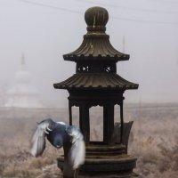 Голуби :: Петр Ступень