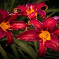 Аленькие цветочки :: Любовь Анищенко