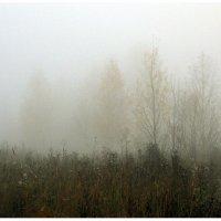 Утро, туманное.... :: Ирина