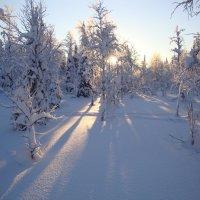 предобеденное зимнее солнце... :: Funt_Izum / Владимир