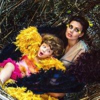 Bird Nest :: Константин Ройко