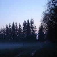 Туман 4 :: Вера Кудина