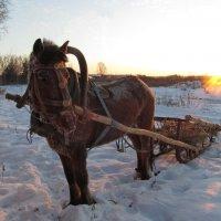 Мороз и солнце, день чудесный!) :: Регина Богомолова