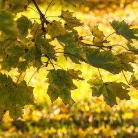 Осенняя улыбка... :: ФотоЛюбка *