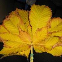 Осенний букет. :: Ляля .