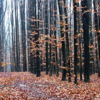 осень :: юрий иванов
