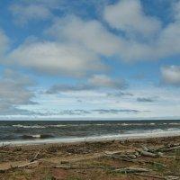 У Белого моря.. :: ирина )))