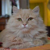 Моя кошечка :: Егор Ипатьев