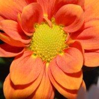 цветочек :: Юля Гайдук