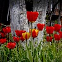 красный уголок в саду :: gribushko грибушко Николай
