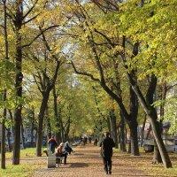 Осенняя аллея :: ирина )))