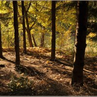 Я в лес хожу с деревьями шептаться :: Ирина Данилова