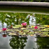 Никитский Ботанический Сад. :: Константин Ушмаев