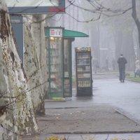 В тумане :: Александр Скамо