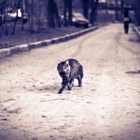 Уличный кот :: Kate Knyazeva